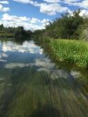Healthy river
